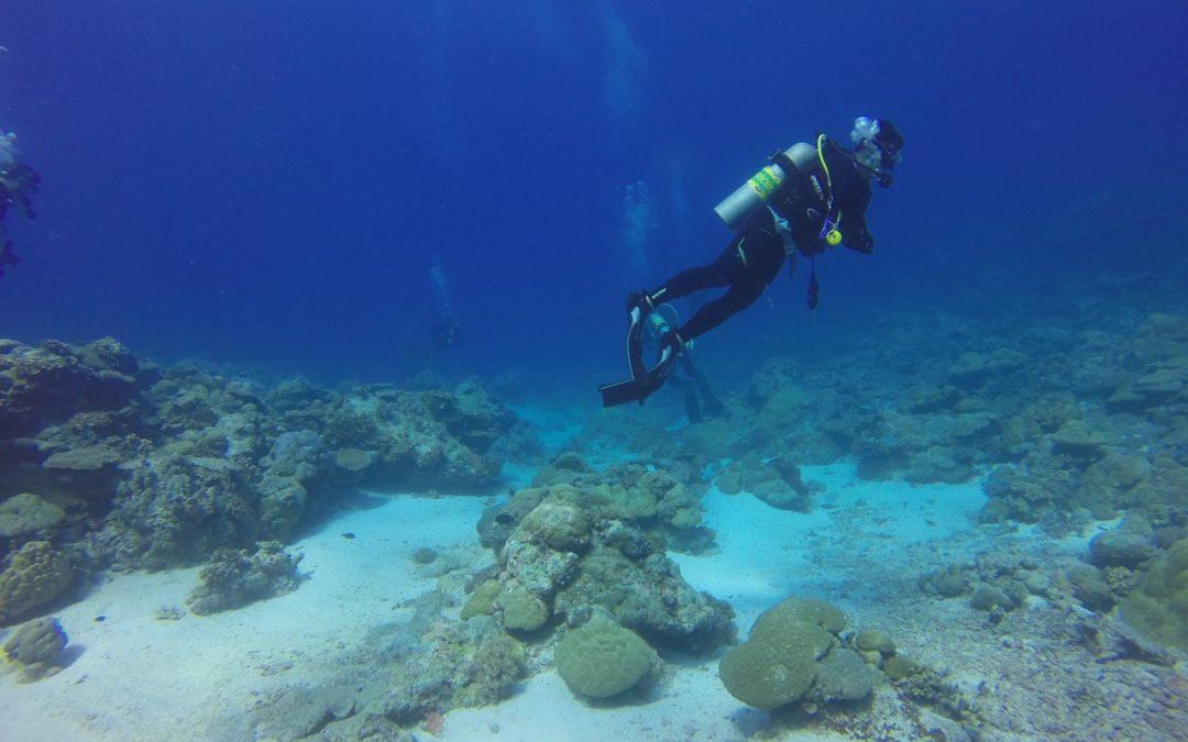Jaki sprzęt jest potrzebny do nurkowania?