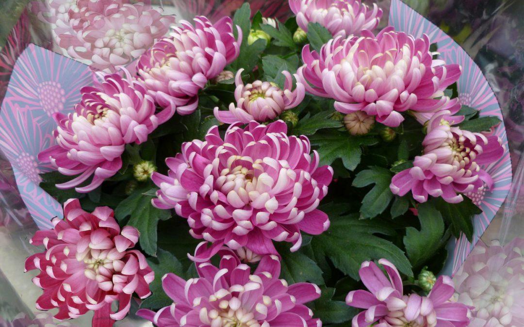 Kwiaciarnia – zapachy i kolory na każdą okazję